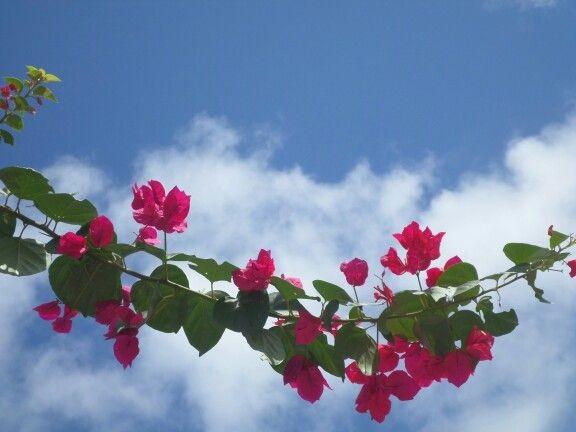 زیباکنار فصل بهار
