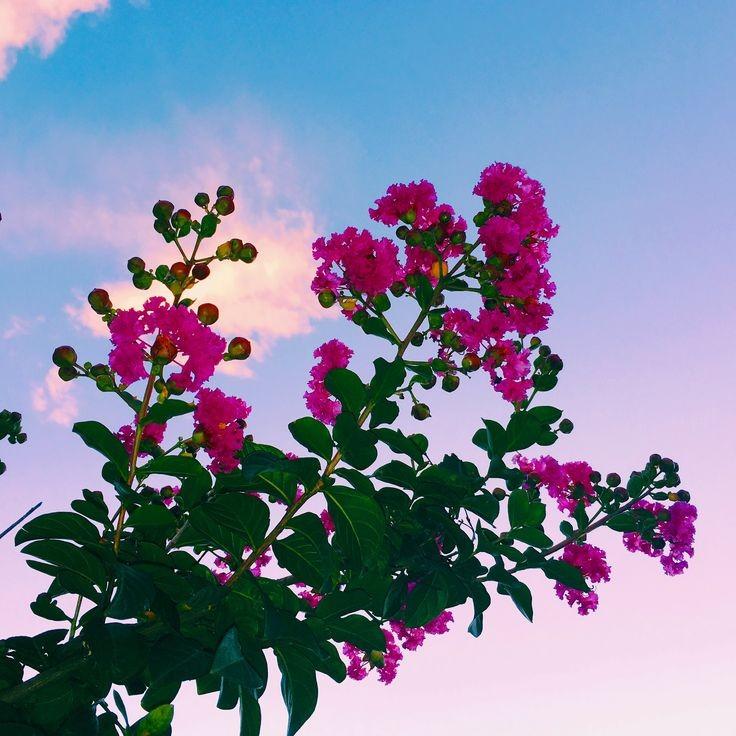 بهار زیباکنار
