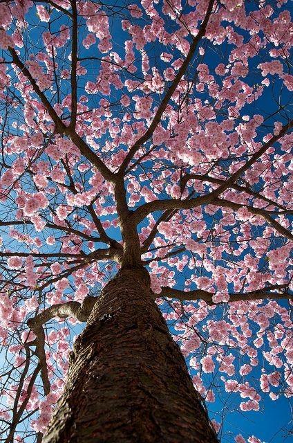 زیباکنار در یک روز بهاری