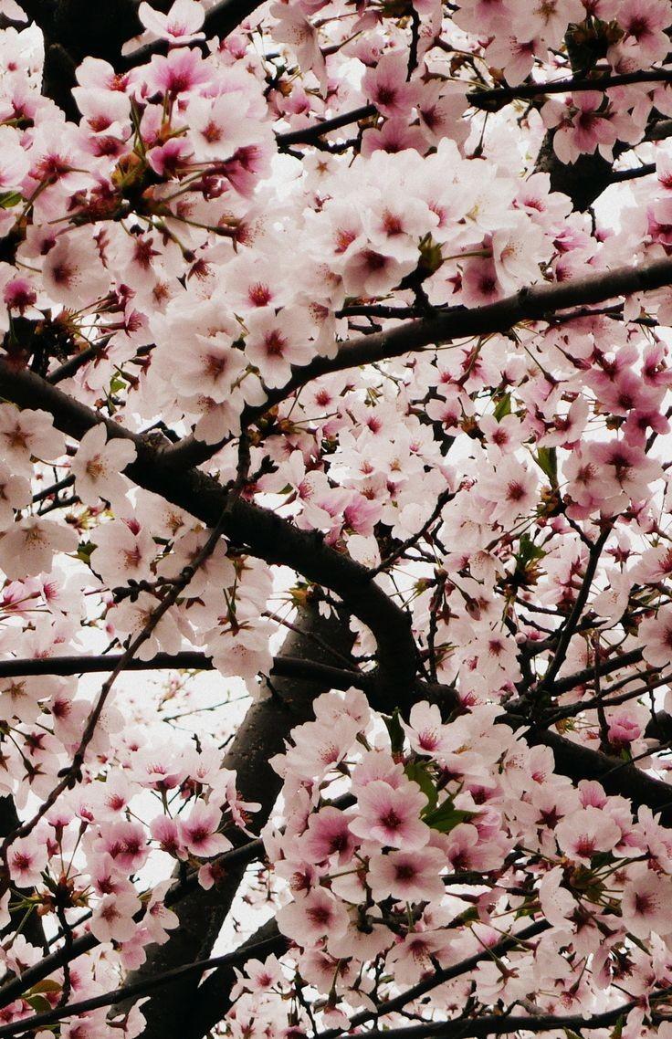 بهار زیباکنار گیلان