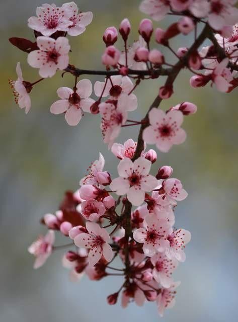زیباکنار گیلان در فصل بهار 99