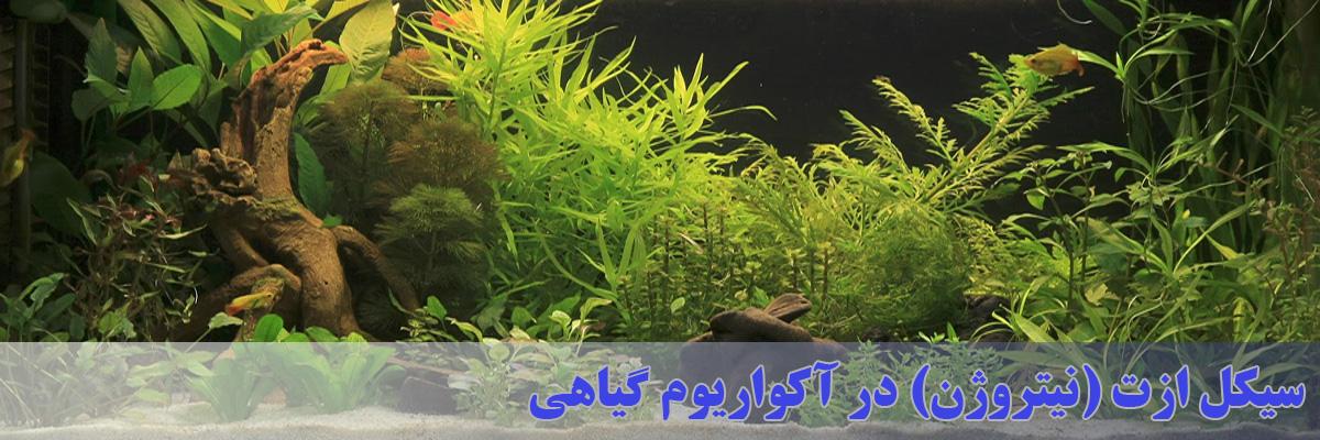 سیکل ازت یا چرخه نیتروژن در آکواریوم گیاهی
