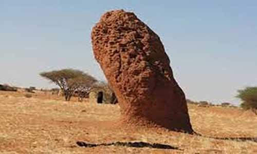موریانهها از تهویه مطبوع هوای خانههایشان غافل نمیشوند