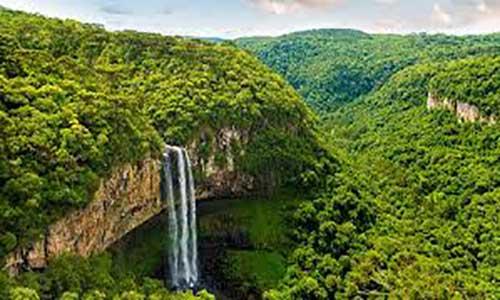 حقایق جالب در مورد جنگل های آمازون