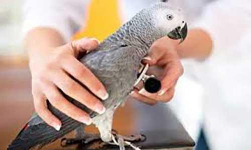 جزوه درس پرنده شناسی