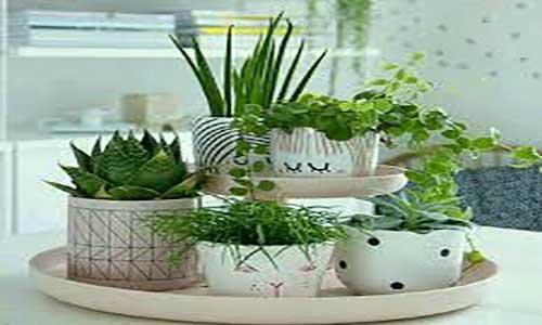 آموزش پرورش گل و گیاه زینتی